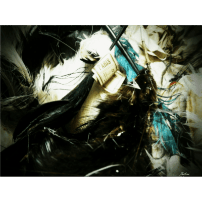 feathers-mid-sq-tr