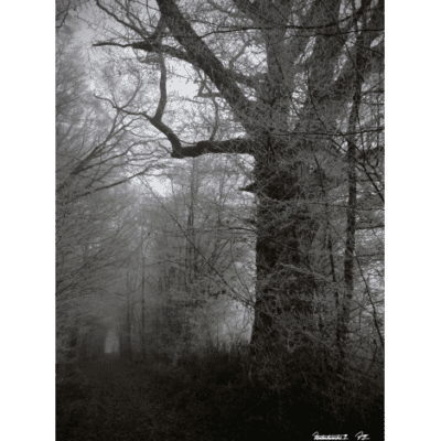 foret_for-print_sq_mid-1